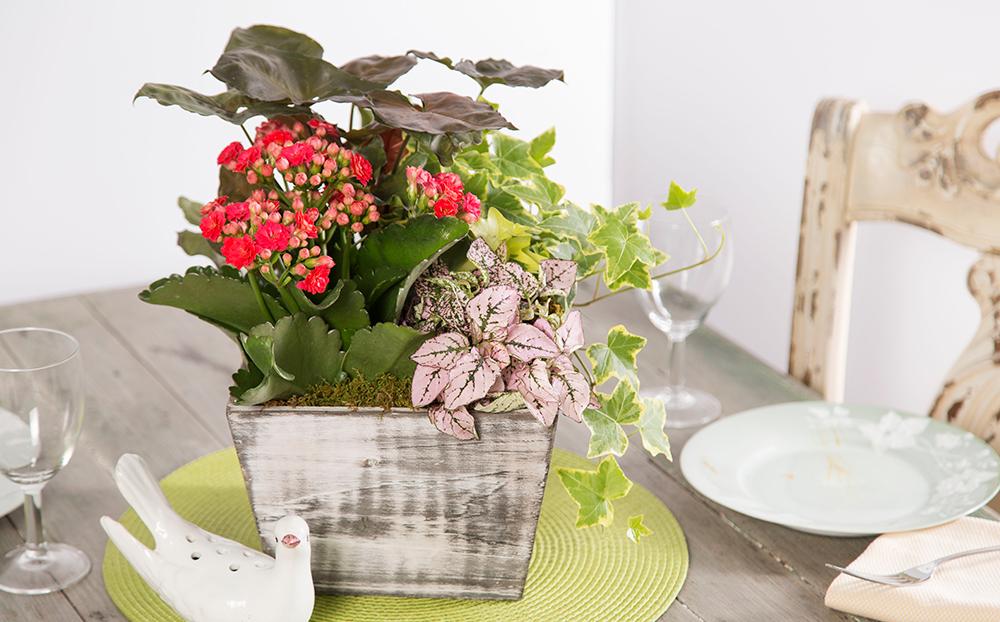 Housewarming Pink Paradise Dish Garden