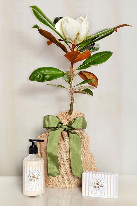 Southern Magnolia & Almond