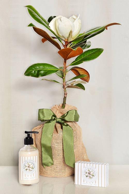 Magnolia & Almond Gift Set