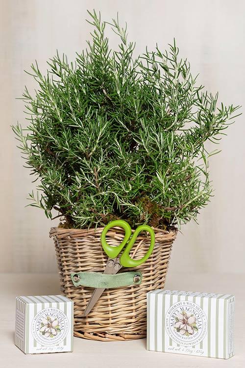 Rosemary Basket Gift Set