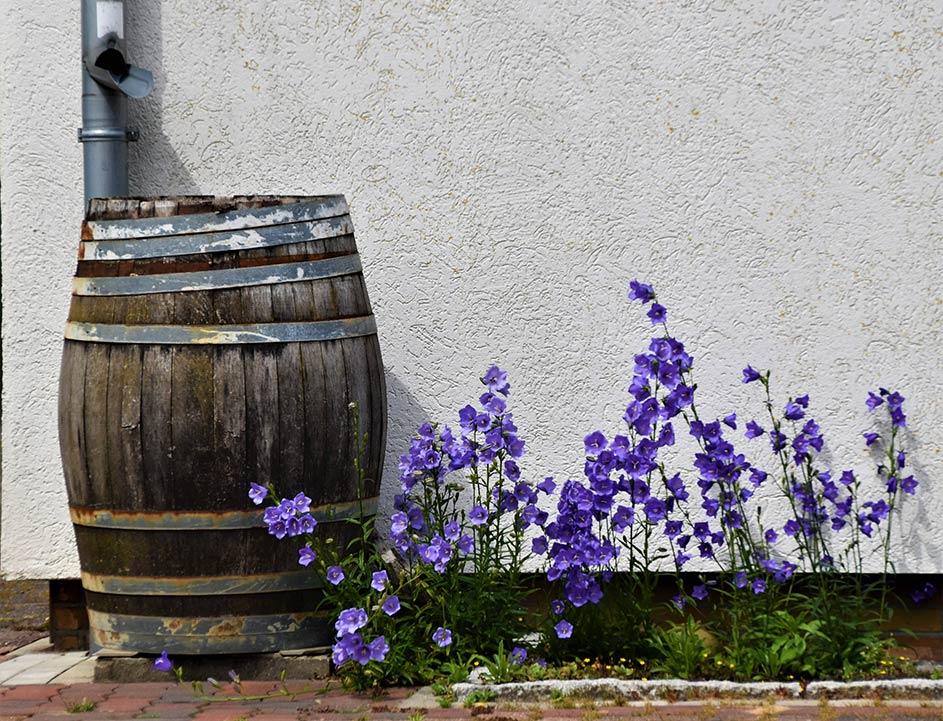 Garden Rain Barrel by House
