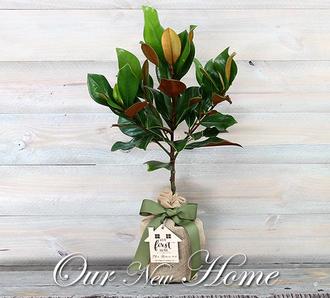 Southern Magnolia Tree Housewarming Gift & Keepsake - Our New Home