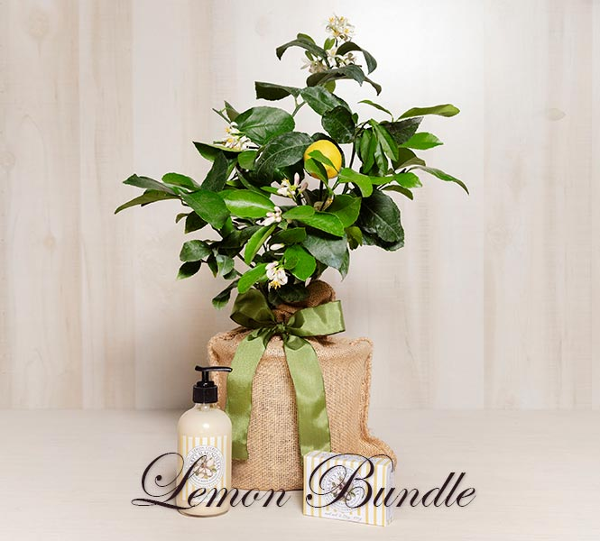 Lemon Tree Gift Bundle