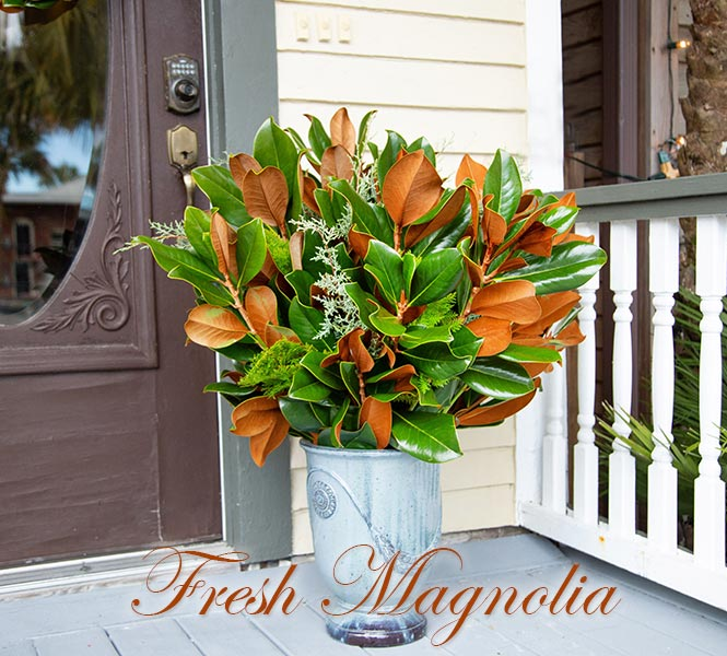 Fresh Magnolia in Vase - Magnolia Branches