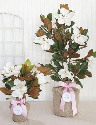 Baby Girl Southern Magnolia Tree The Magnolia Company